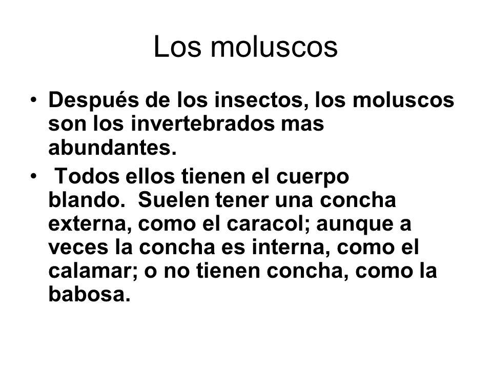 Los moluscos Después de los insectos, los moluscos son los invertebrados mas abundantes.
