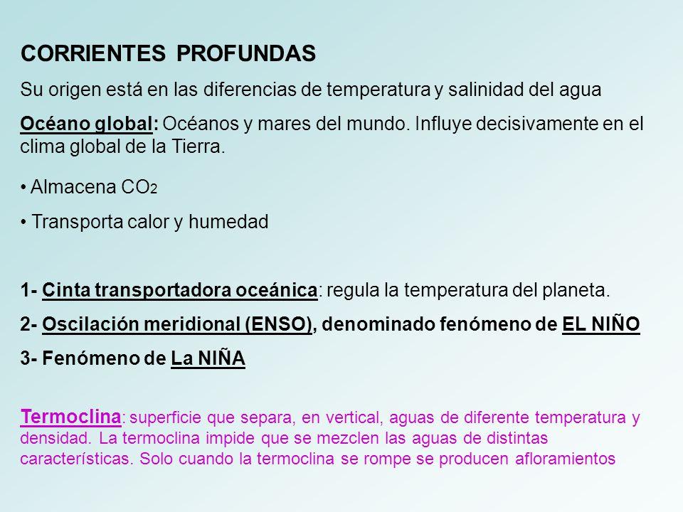 CORRIENTES PROFUNDAS Su origen está en las diferencias de temperatura y salinidad del agua.