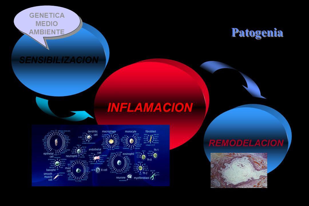 Patogenia INFLAMACION SENSIBILIZACION REMODELACION GENETICA
