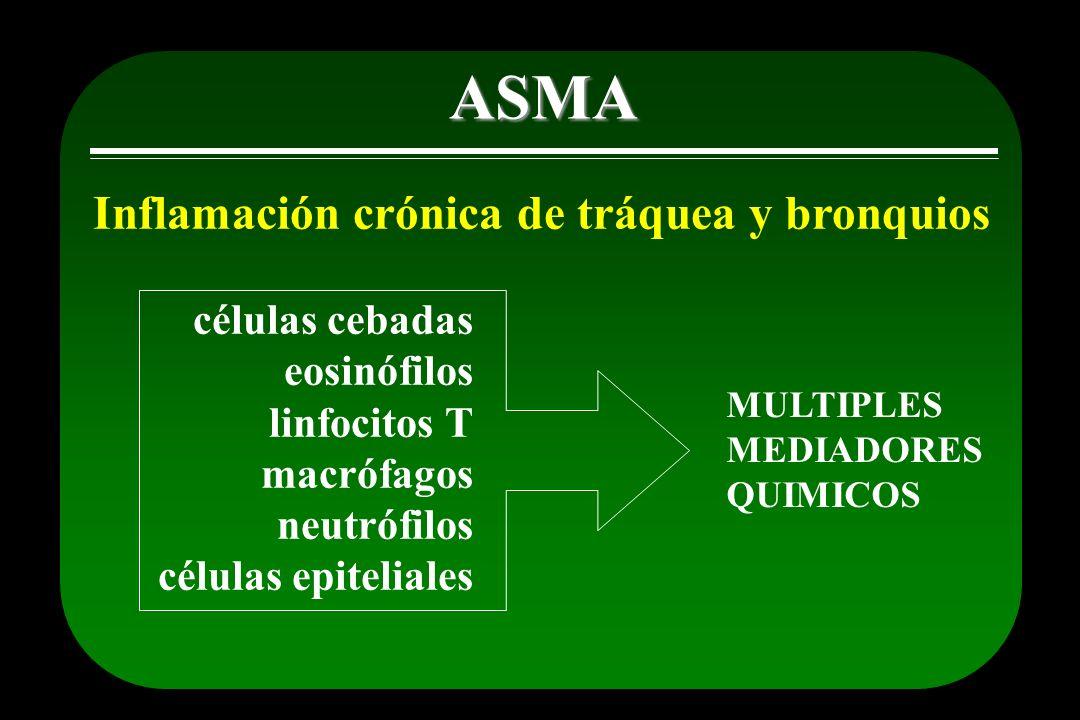 ASMA Inflamación crónica de tráquea y bronquios células cebadas