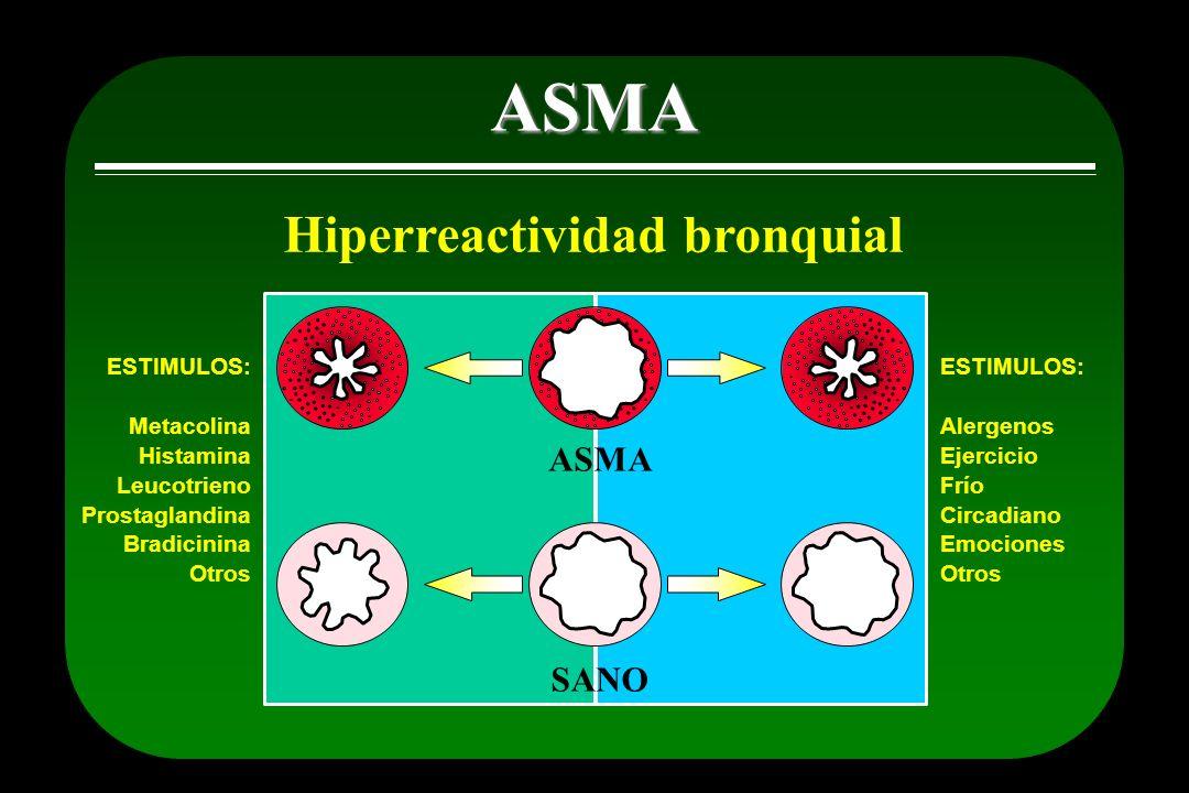 ASMA Hiperreactividad bronquial ASMA SANO ESTIMULOS: