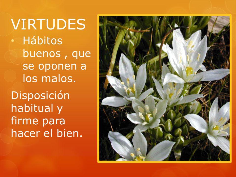 VIRTUDES Hábitos buenos , que se oponen a los malos.
