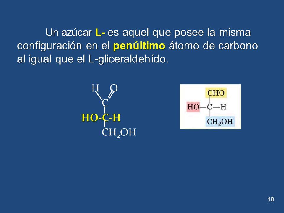 Un azúcar L- es aquel que posee la misma configuración en el penúltimo átomo de carbono al igual que el L-gliceraldehído.