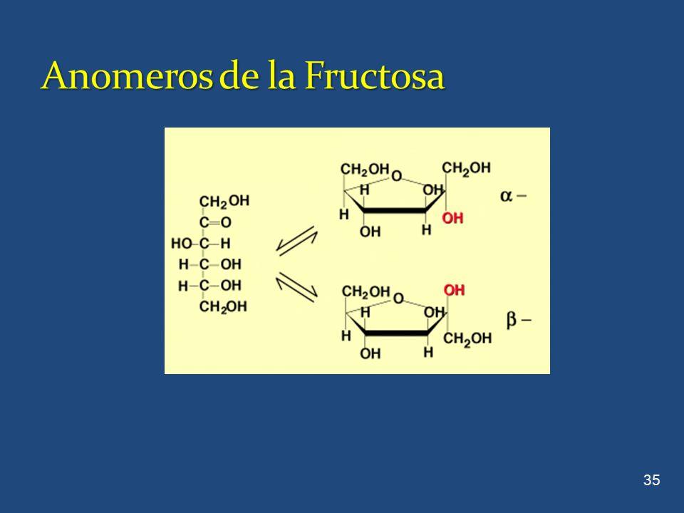 Anomeros de la Fructosa