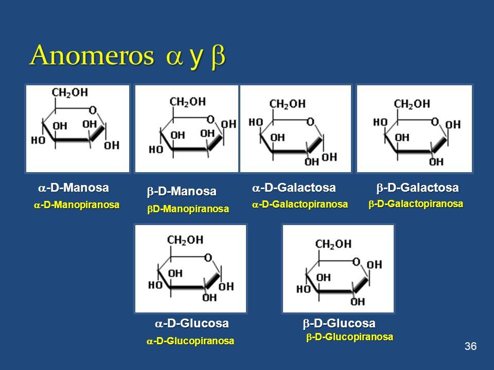Anomeros  y  a-D-Manosa a-D-Galactosa b-D-Galactosa b-D-Manosa