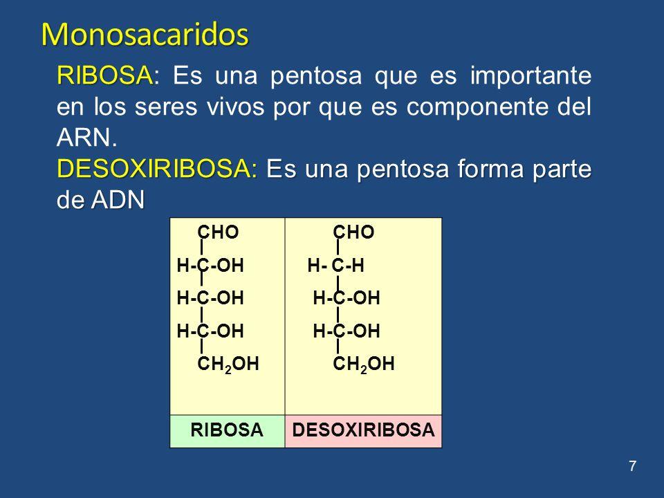 Monosacaridos RIBOSA: Es una pentosa que es importante en los seres vivos por que es componente del ARN.