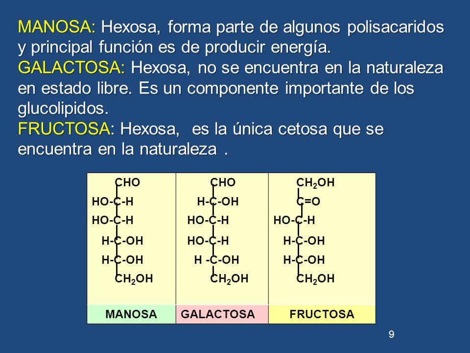 MANOSA: Hexosa, forma parte de algunos polisacaridos y principal función es de producir energía.
