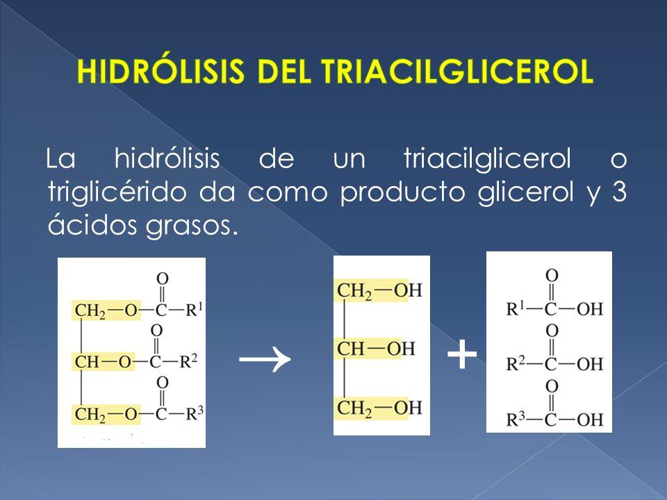 HIDRÓLISIS DEL TRIACILGLICEROL