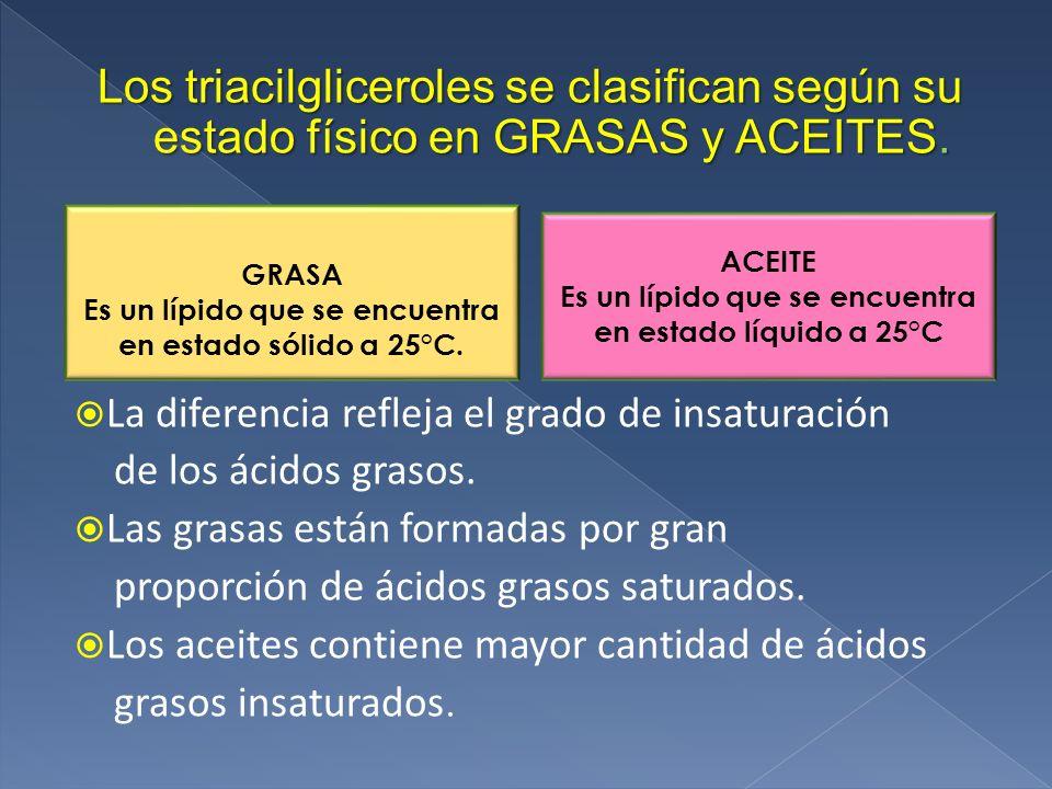 Los triacilgliceroles se clasifican según su estado físico en GRASAS y ACEITES.