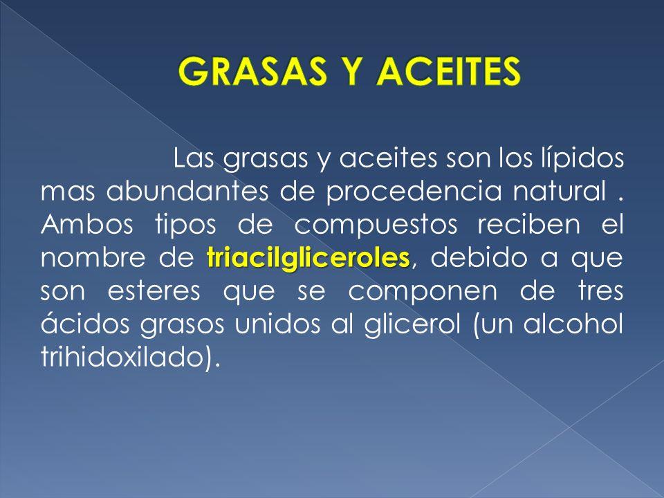 GRASAS Y ACEITES