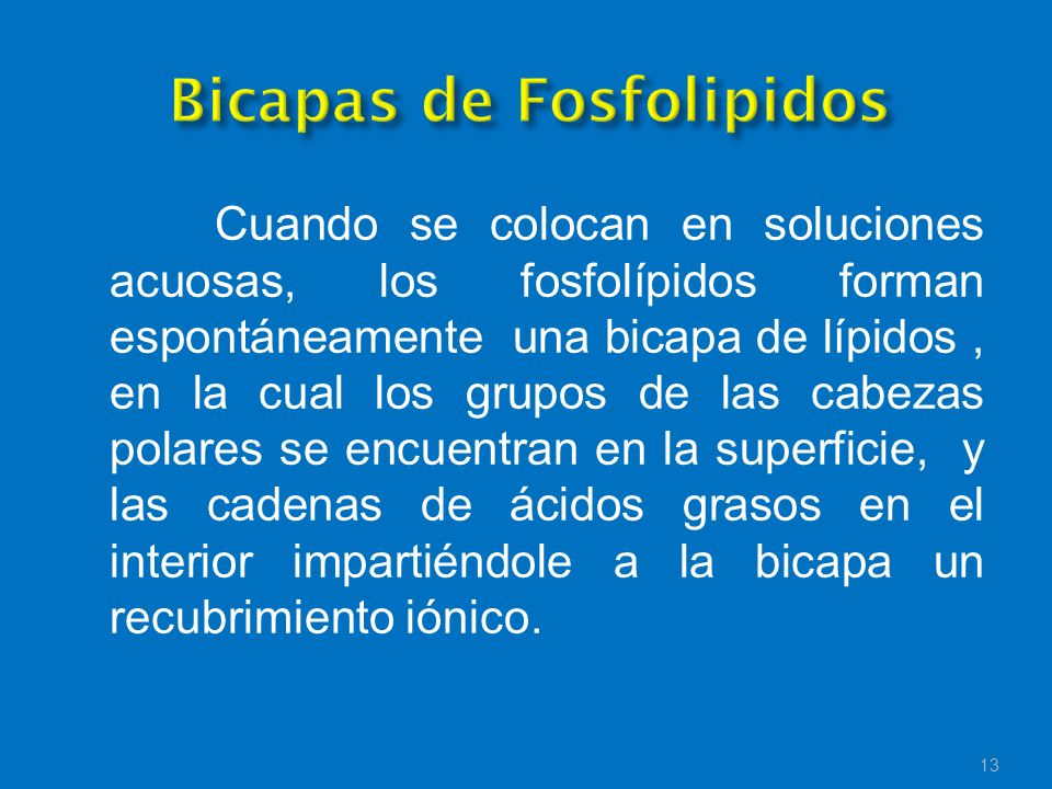Bicapas de Fosfolipidos