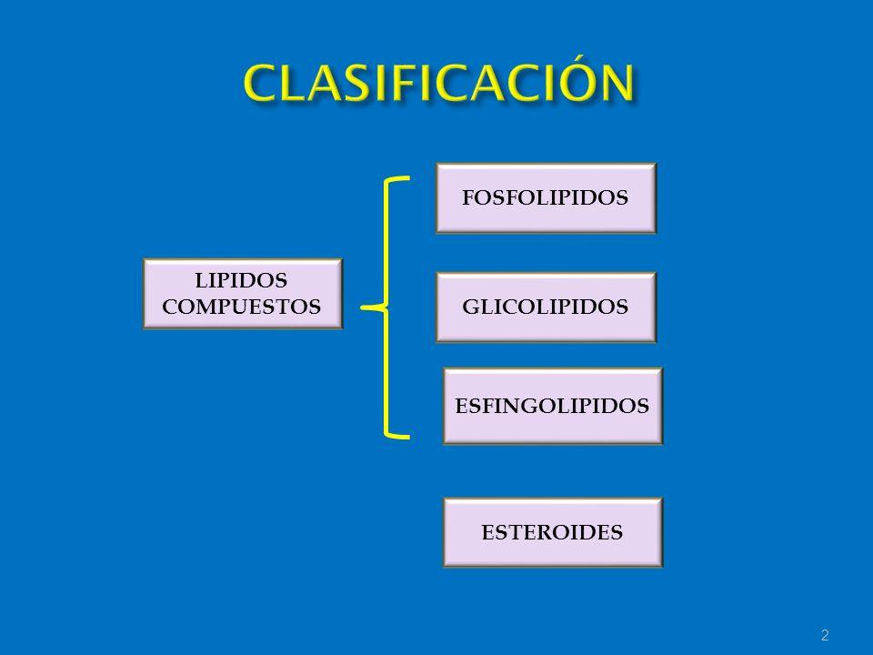 CLASIFICACIÓN FOSFOLIPIDOS LIPIDOS COMPUESTOS GLICOLIPIDOS