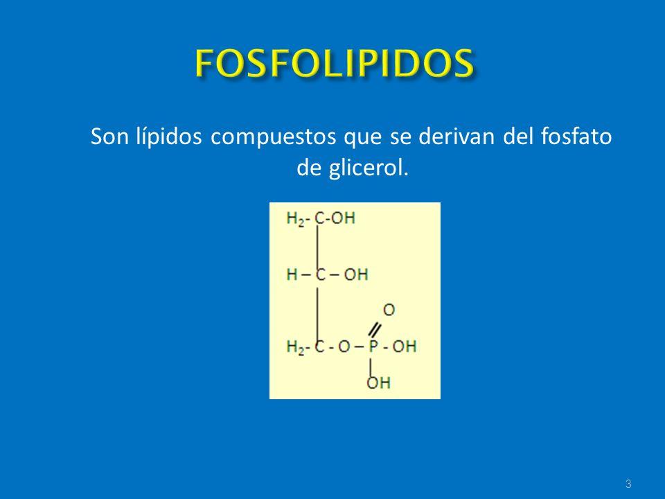Son lípidos compuestos que se derivan del fosfato de glicerol.