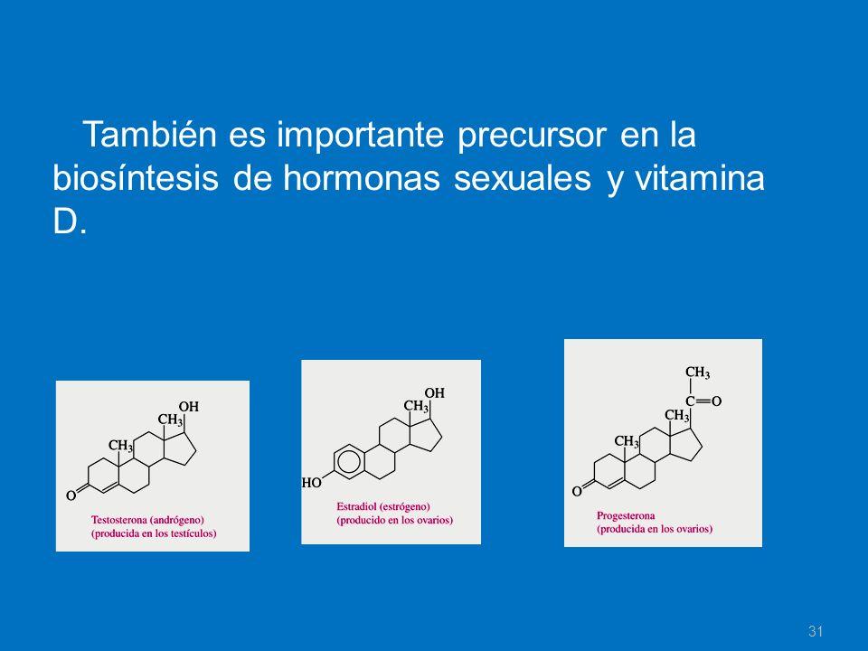 También es importante precursor en la biosíntesis de hormonas sexuales y vitamina D.