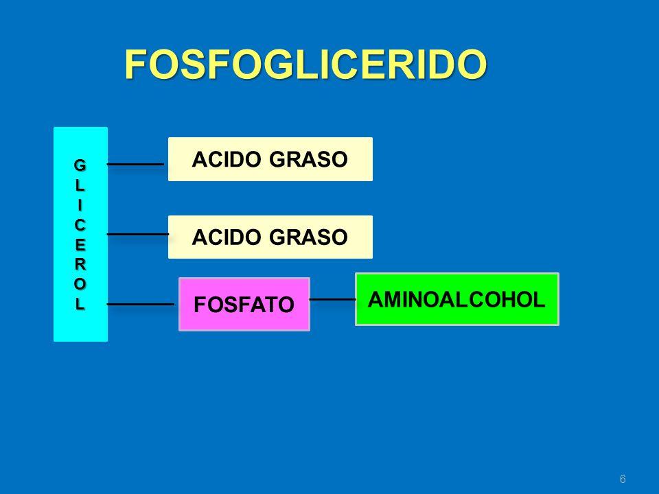 FOSFOGLICERIDO ACIDO GRASO ACIDO GRASO AMINOALCOHOL FOSFATO G L I C E