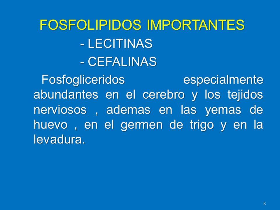 FOSFOLIPIDOS IMPORTANTES
