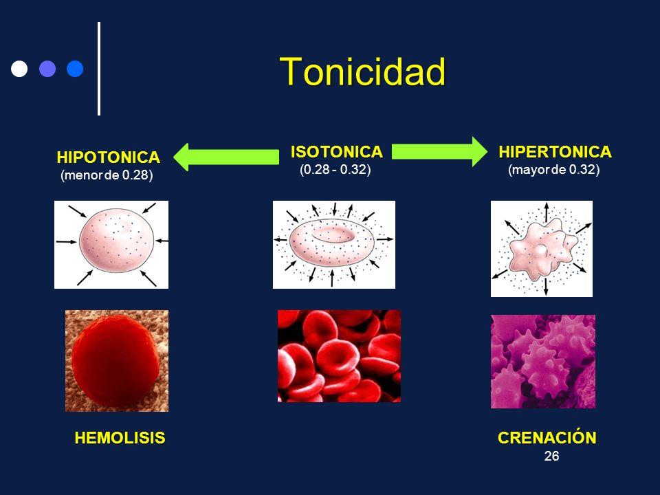 Tonicidad HEMOLISIS CRENACIÓN ISOTONICA (0.28 - 0.32) HIPERTONICA