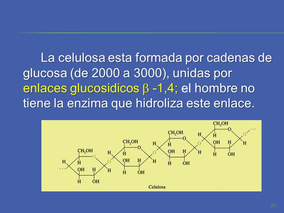 La celulosa esta formada por cadenas de glucosa (de 2000 a 3000), unidas por enlaces glucosidicos b -1,4; el hombre no tiene la enzima que hidroliza este enlace.