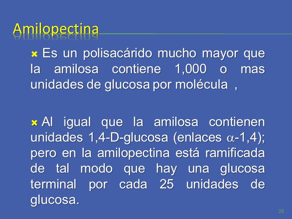 AmilopectinaEs un polisacárido mucho mayor que la amilosa contiene 1,000 o mas unidades de glucosa por molécula ,