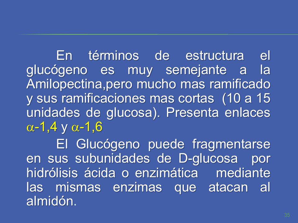 En términos de estructura el glucógeno es muy semejante a la Amilopectina,pero mucho mas ramificado y sus ramificaciones mas cortas (10 a 15 unidades de glucosa).