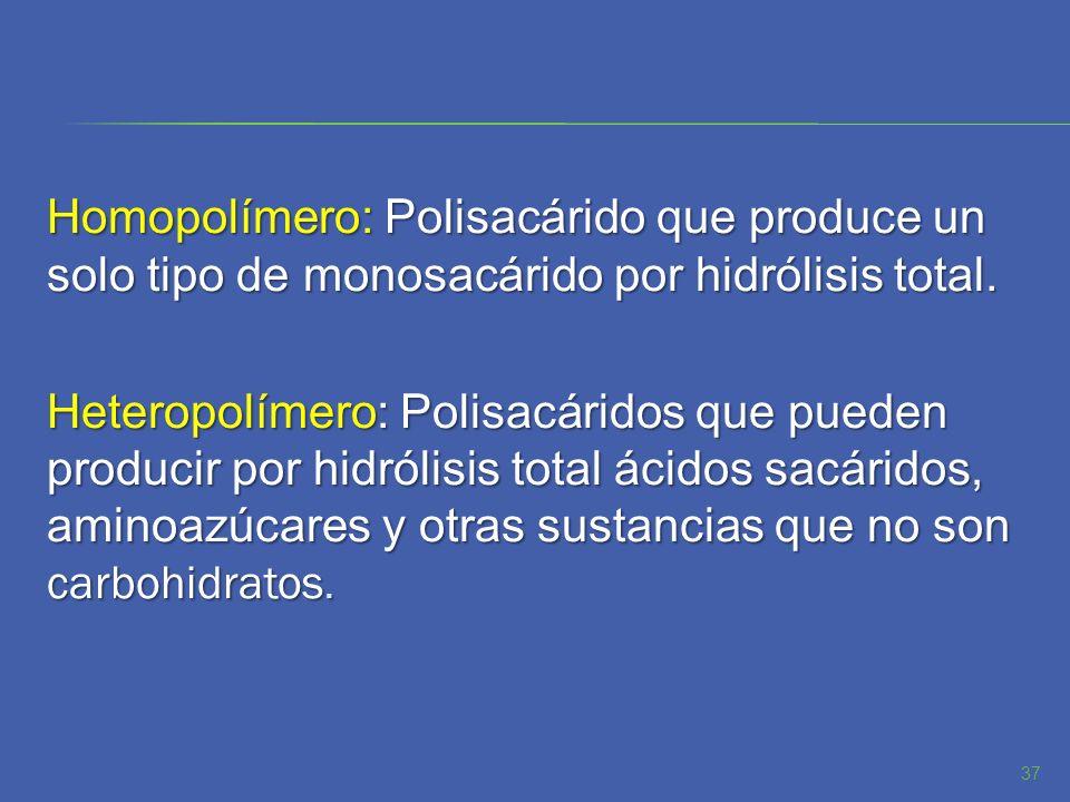 Homopolímero: Polisacárido que produce un solo tipo de monosacárido por hidrólisis total.