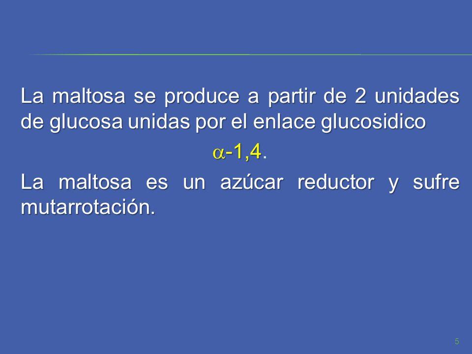 La maltosa se produce a partir de 2 unidades de glucosa unidas por el enlace glucosidico a-1,4.
