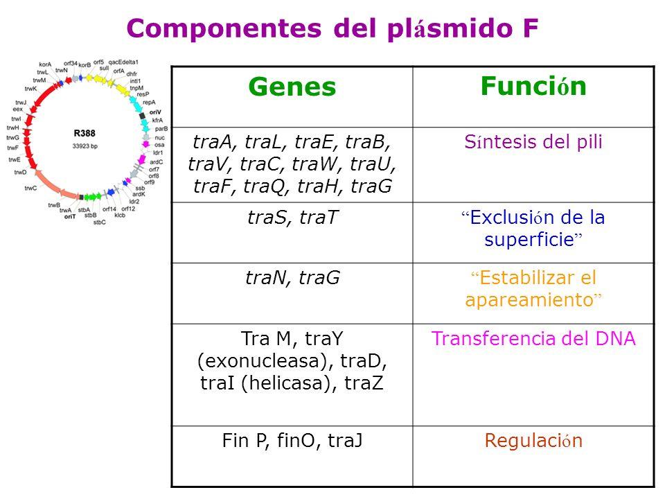 Componentes del plásmido F