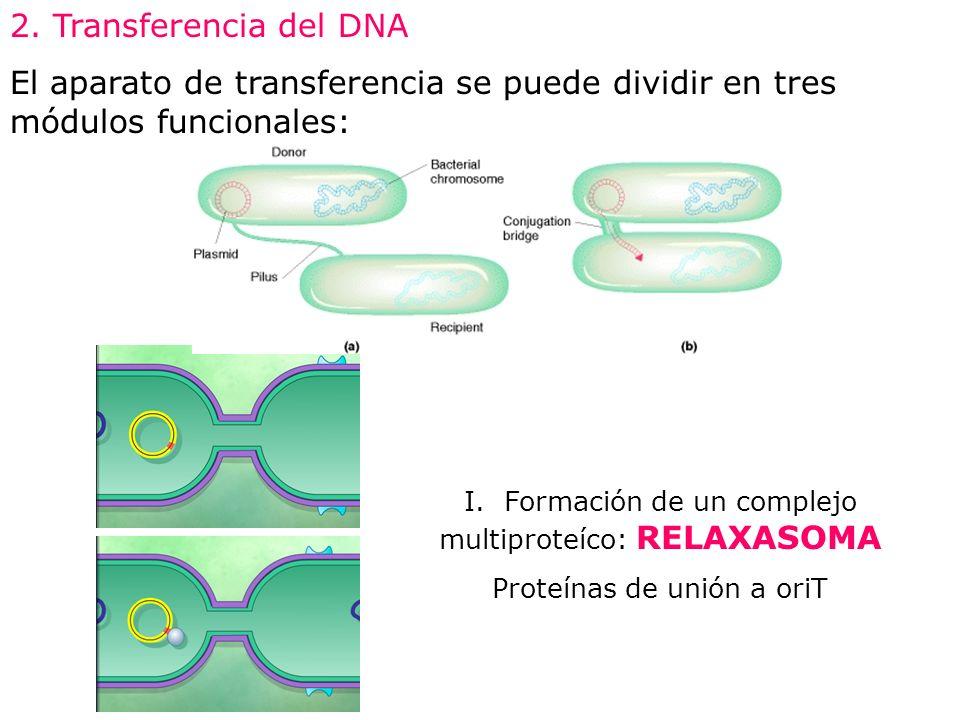 2. Transferencia del DNA El aparato de transferencia se puede dividir en tres módulos funcionales: