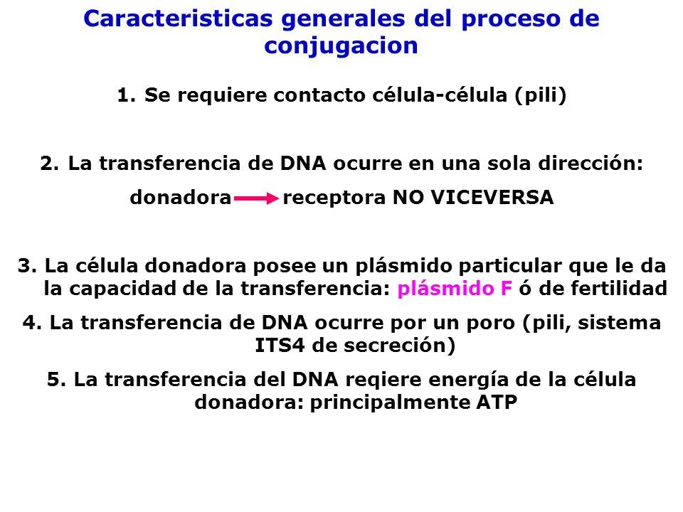 Caracteristicas generales del proceso de conjugacion
