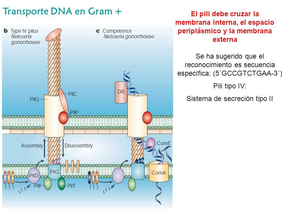 Sistema de secreción tipo II
