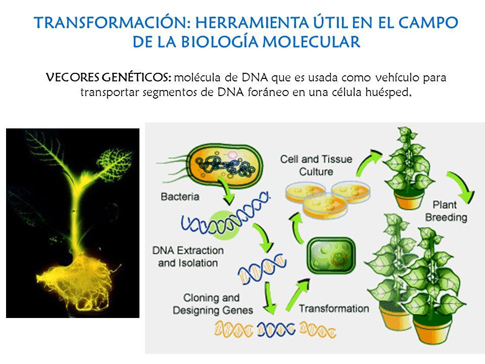TRANSFORMACIÓN: HERRAMIENTA ÚTIL EN EL CAMPO DE LA BIOLOGÍA MOLECULAR