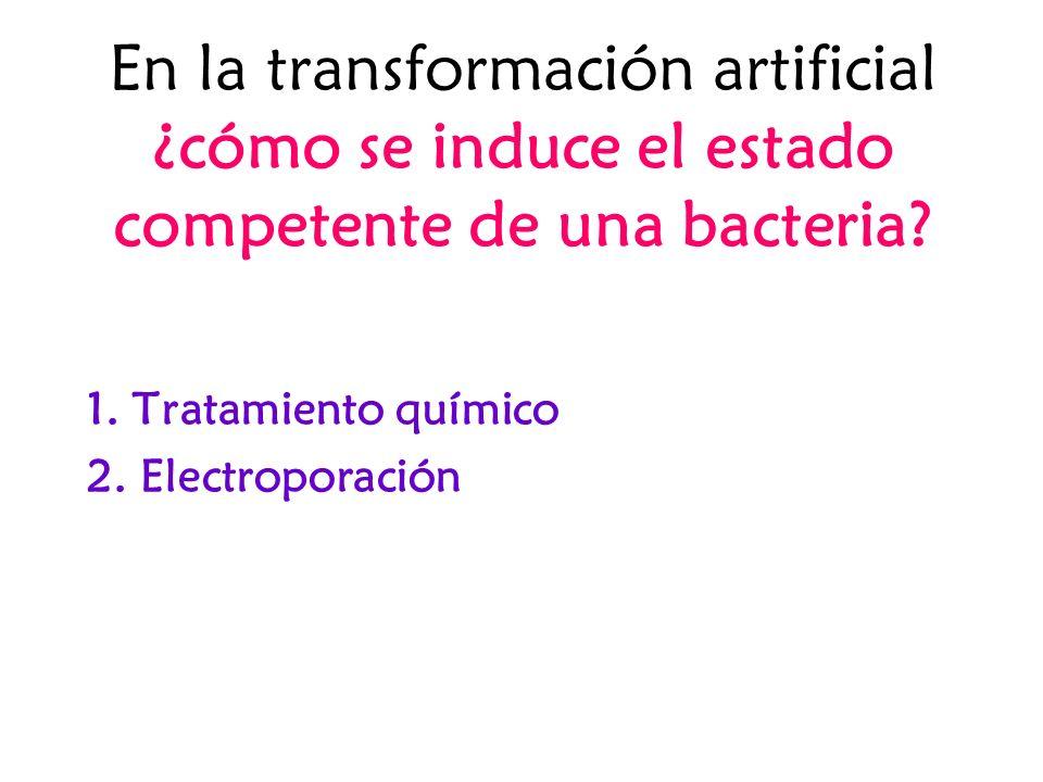 En la transformación artificial ¿cómo se induce el estado competente de una bacteria