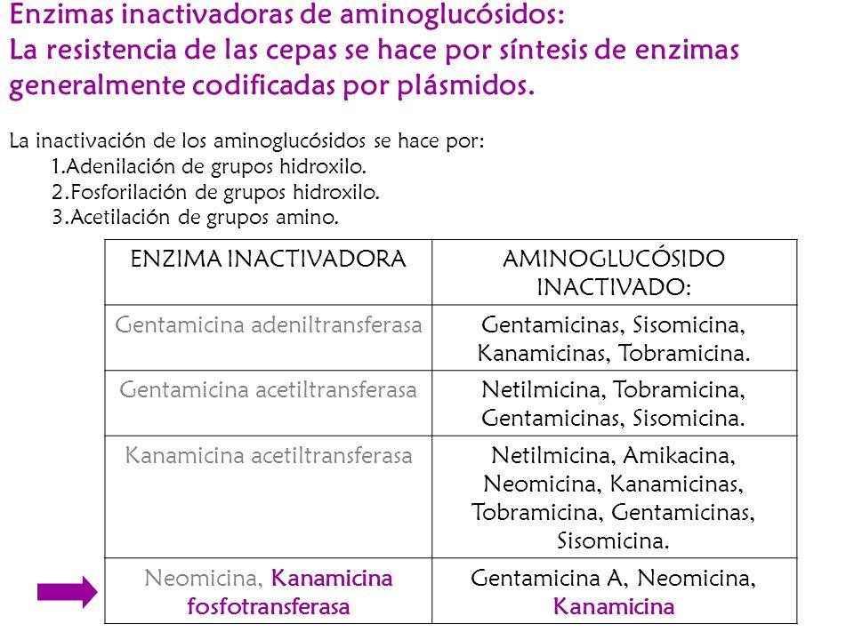 Enzimas inactivadoras de aminoglucósidos: