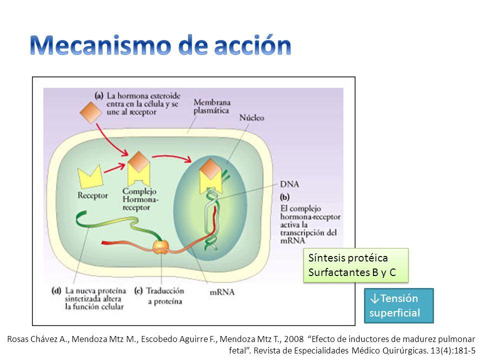 Mecanismo de acción Síntesis protéica Surfactantes B y C