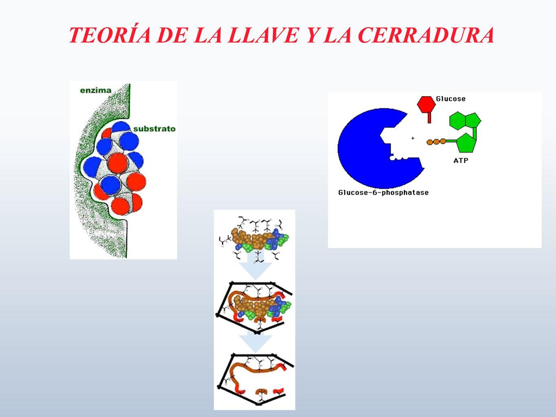 TEORÍA DE LA LLAVE Y LA CERRADURA
