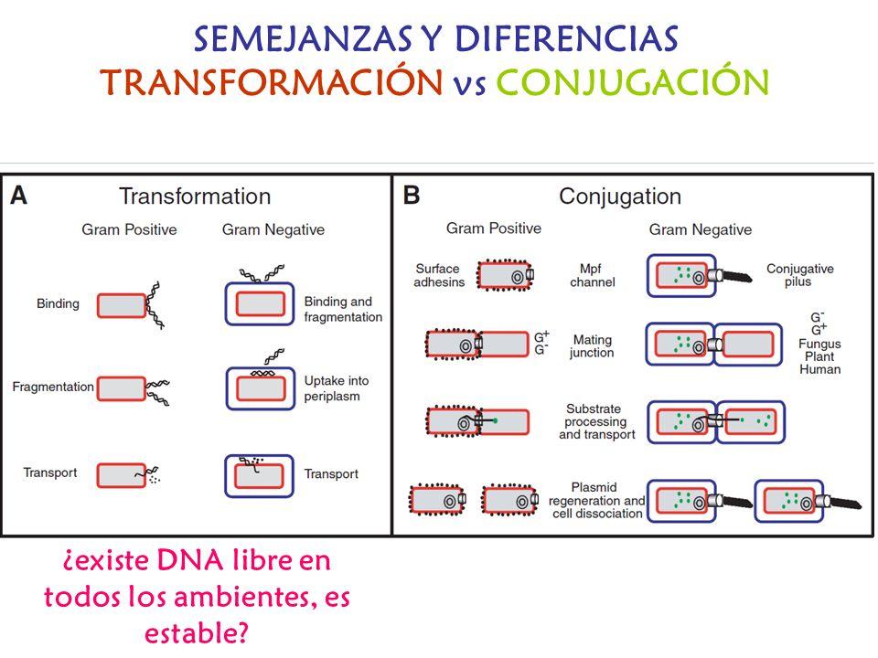 SEMEJANZAS Y DIFERENCIAS TRANSFORMACIÓN vs CONJUGACIÓN
