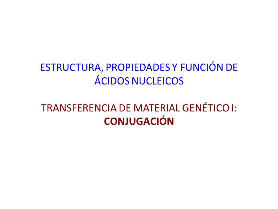 Estructura Propiedades Y Función De ácidos Nucleicos