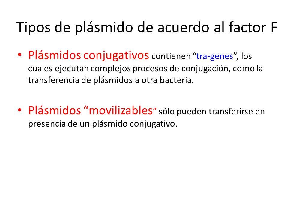 Tipos de plásmido de acuerdo al factor F