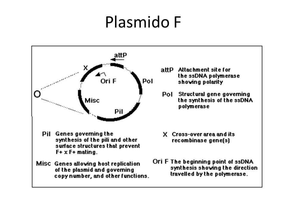 Plasmido F