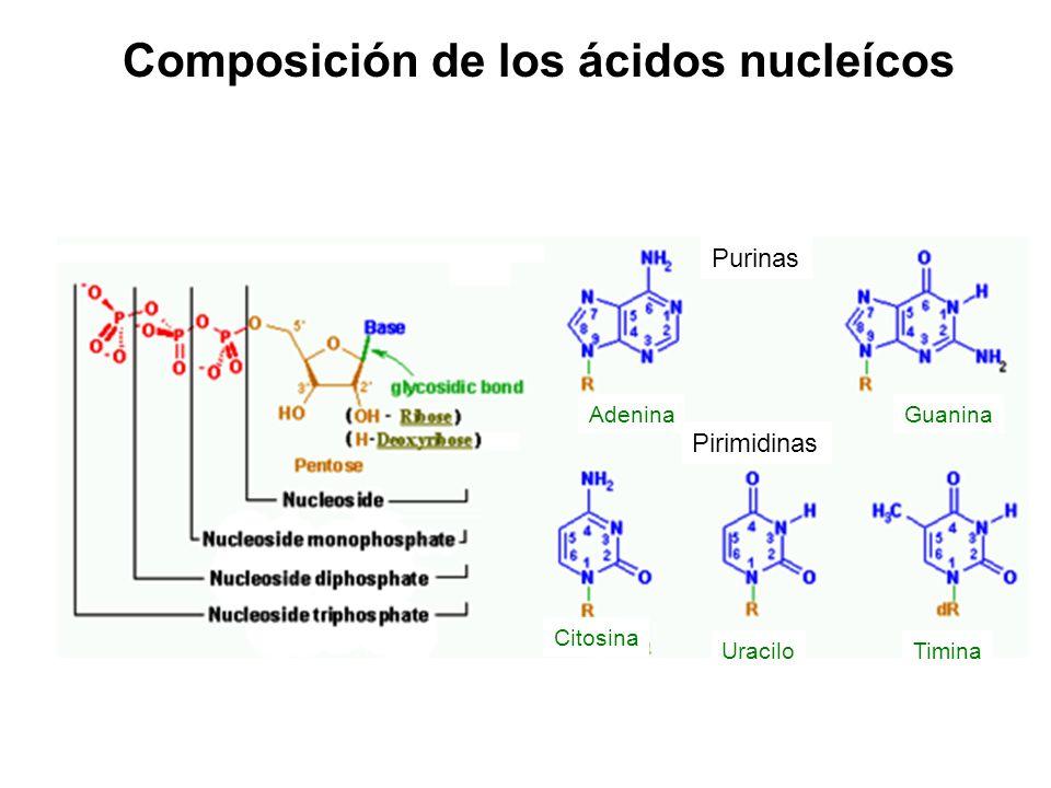 Composición de los ácidos nucleícos