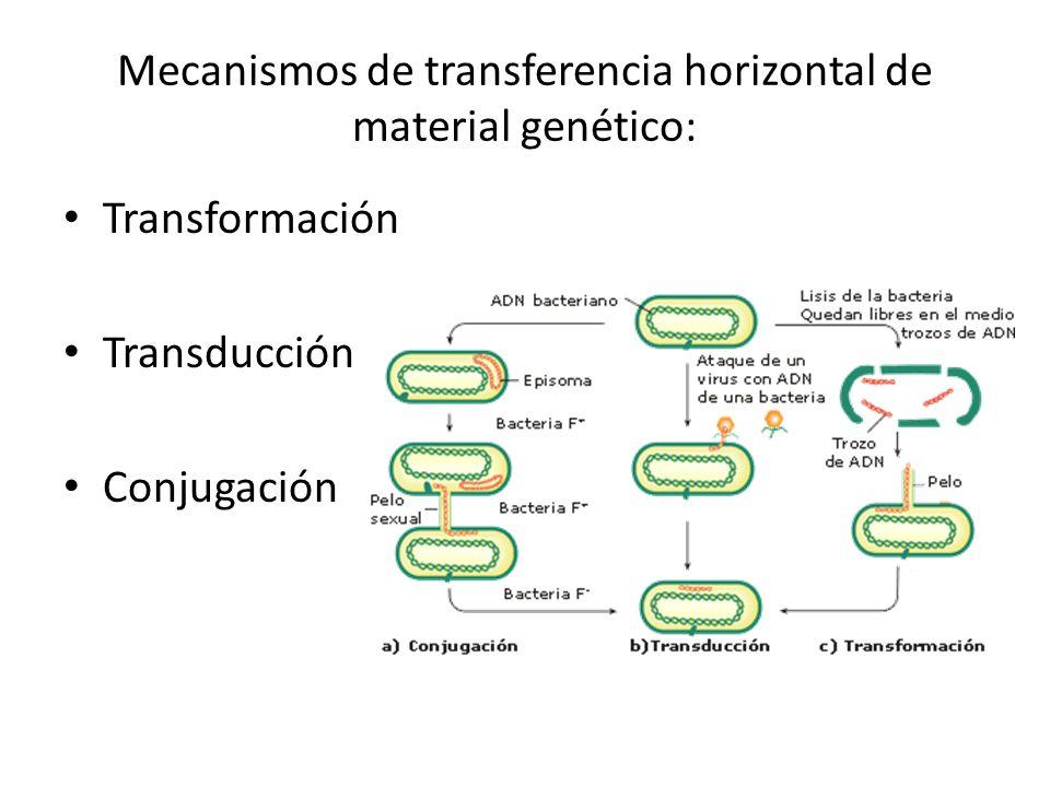 Mecanismos de transferencia horizontal de material genético: