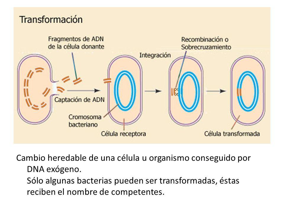 Cambio heredable de una célula u organismo conseguido por DNA exógeno