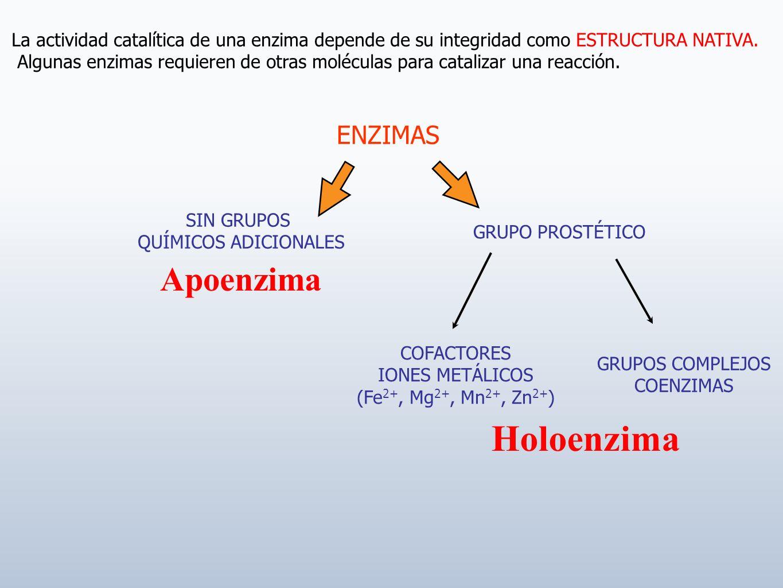 Holoenzima Apoenzima ENZIMAS
