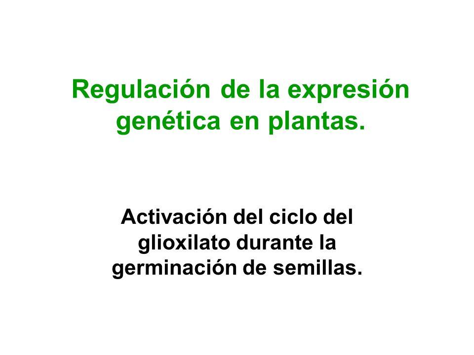 Regulación de la expresión genética en plantas.