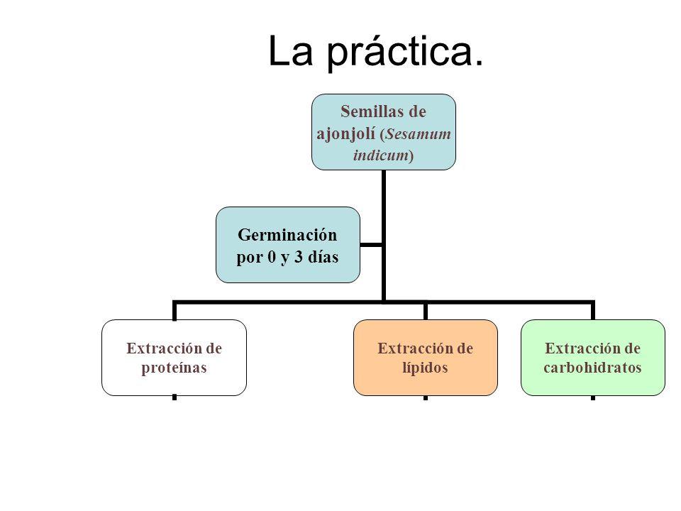 La práctica.