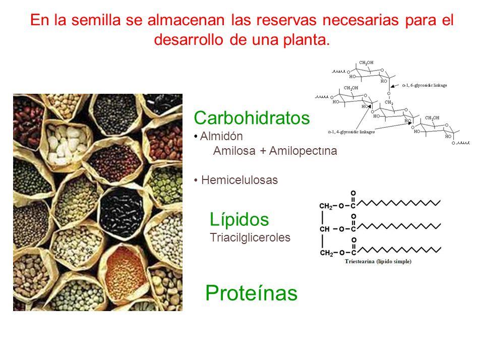 Proteínas Carbohidratos Lípidos