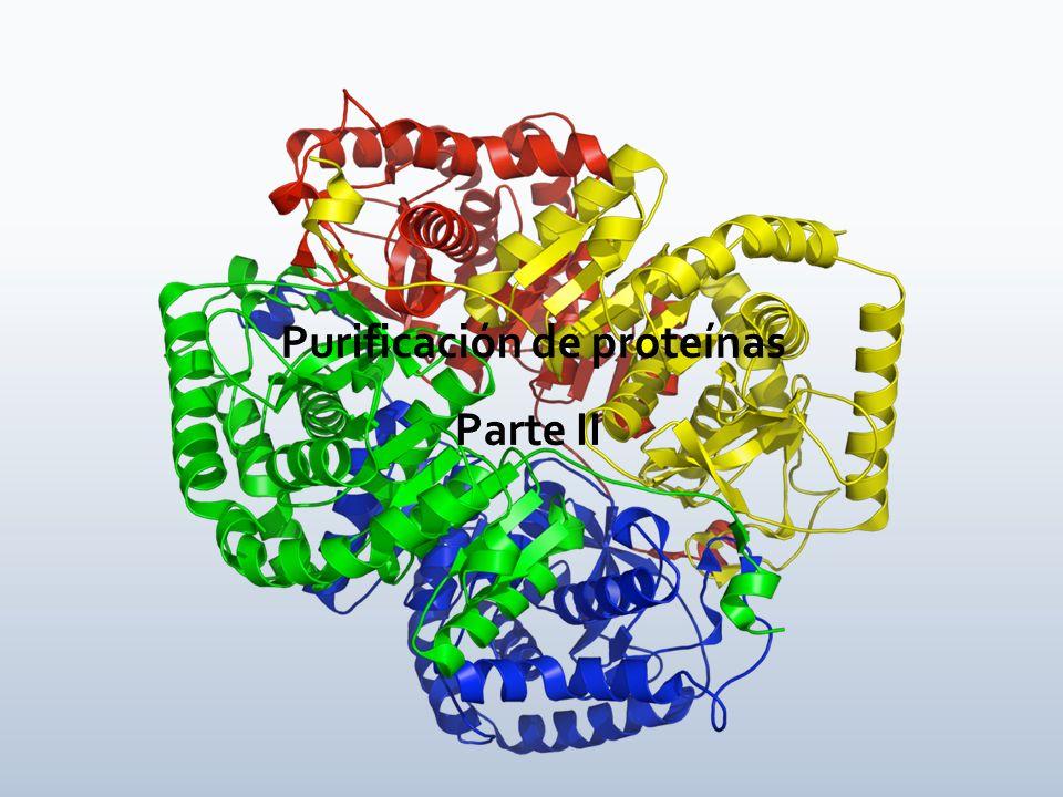 Purificación de proteínas Parte II