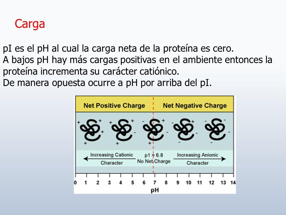 Carga pI es el pH al cual la carga neta de la proteína es cero.