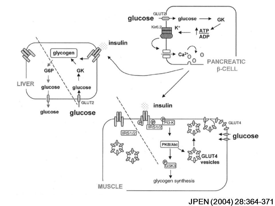 JPEN (2004) 28:364-371