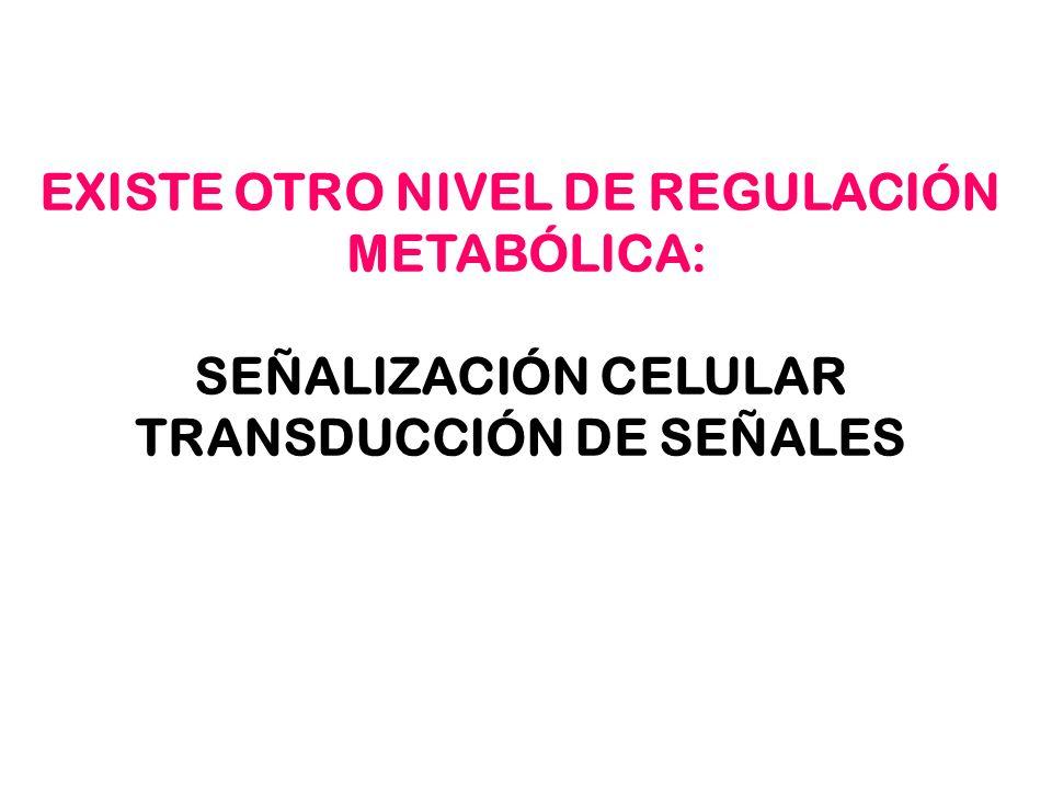 EXISTE OTRO NIVEL DE REGULACIÓN TRANSDUCCIÓN DE SEÑALES